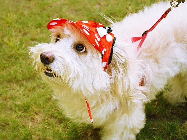 gorra para perros